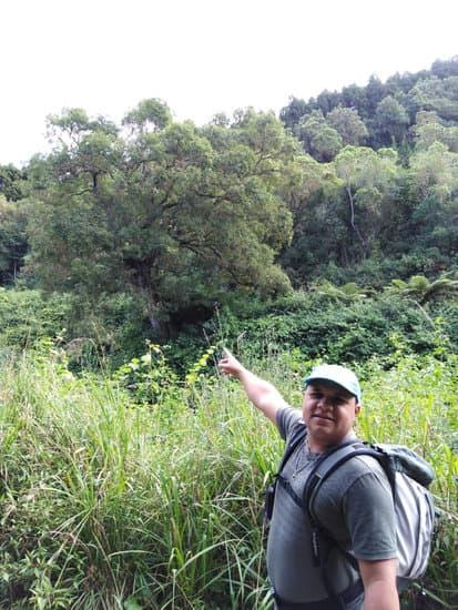 Dans la forêt du Tévelave avec Ti' Tang